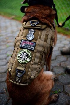 SPANGDAHLEM AIR BASE, Germany – A line of patches rest on the vest of Katya, Security Forces Squadron military working dog, during a unit demonstration at the military working dog kennel Oct. Katya has been with her handler, Staff Sgt. Military Working Dogs, Military Dogs, Police Dogs, Military Service, War Dogs, Belgian Malinois, Search And Rescue, Service Dogs, Service Dog Patches