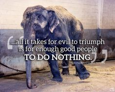 All it takes for evil to triumph... http://www.wwf.org.uk/what_we_do/safeguarding_the_natural_world/wildlife/illegal_wildlife_trade/ -! Save the Animals!!