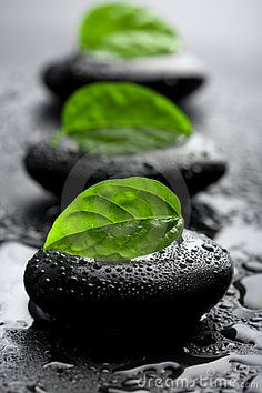 Zen stones and leaves with water drops. Black zen stones and leaves with water d , Splash Photography, Color Photography, Black And White Photography, Contrast Photography, Artistic Photography, Life Photography, Color Splash, Color Pop, Color Black