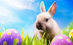 easter rabbit Check more at http://hdwallpaperfx.com/easter-rabbit/