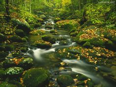 Beautiful Roaring Fork in the Great Smoky Mountains