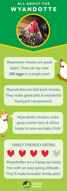 Wyandotte chickens are an all round amazing breed. They're stylish, gifted egg layers and have a bold but friendly personality. Check out their breed profile here, http://www.backyardchickencoops.com.au/gold-laced-wyandotte/ #loveyourchickens #infographic #Wyandottechickens