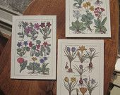 150 Reproduction Postcards Featuring Antique Botanical Engravings - Printed in Italy| Green Peak Elements
