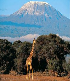 MOUNT KILIMANJARO: my daughter's goal is to climb this some day :)
