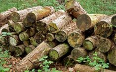 Wildlife garden: How to build a log pile to attract insects Garden Ideas With Logs, Small Natural Garden Ideas, Eco Garden, Garden Care, Garden Paths, Garden Archway, Amazing Gardens, Beautiful Gardens, Php