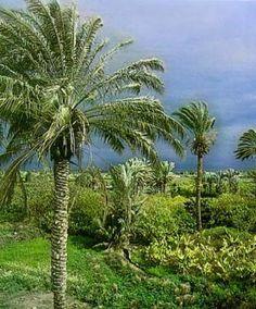 Jericho, Israel  #travel #travelphotography #travelinspiration #israel