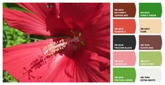 Floral paint color scheme. Great for accent walls or if you want a bold room - #chipit. #summer