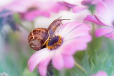snail and flowers 2 - null