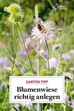 Im Rasen gibt es keinen Lebensraum für Bienen und andere Insekten, in einer Wiese mit Kräutern und Blumen summen sie aber um die Wette. So einfach kann man eine Blumenwiese für die fliegenden Gäste anlegen. #blumenwiese #gartengestaltung Gras, Plants, Colorful Flowers, Insects, Begonia, Plant, Planets