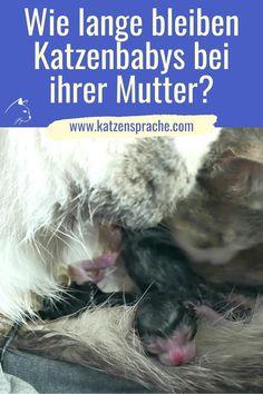 Manche Kätzinnen sind hingebungsvolle Katzenmütter, die sich rund um die Uhr um die Aufzucht ihrer Jungen kümmern und andere dagegen weniger. Es hängt auch ganz vom Willen der Mutter ab, bis zu welchem Alter sie ihre Katzenbabys trinken lässt. #katze #katzen #kitten #katzenbabys #katzenverhalten #katzenhacks #katzentipps #schönekatzen #katzenbabysbilder #cat #cats #katzenbabyssüß #katzenbabysvideo #katzengeburt