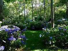 jardin Shamrock, Normandie. L'une des plus belles collections d'hydrangéas. A voir absolument.