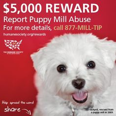 $5,000 REWARD ~~ REPORT PUPPY MILL ABUSE ~~ FOR MORE DETAILS CALL 877-MILL-TIP ~~ Humane Society of the US ~~ humanesociety.org/rewards