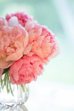 pink peonies: Jessica Holden Photography Love the background color w/ the floral colors! Fresh Flowers, Pink Flowers, Beautiful Flowers, Exotic Flowers, Yellow Roses, Pink Roses, Bloom, Austin Rosen, Gardenias
