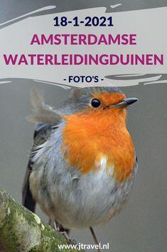 Ik maakte een wandeling in de Amsterdamse Waterleidingduinen. Dit keer zag ik een roodborstje en damherten. Mijn foto's zie je hier. Kijk je mee? #awd #damhert #roodborstje #wandelen #hiken #natuur #jtravel #jtravelblog #fotos