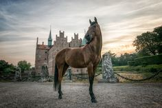 Dejo at the castle by Erik Kunddahl on 500px