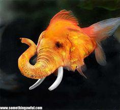 Elephafish (very rare)