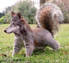 Brilliant, beautiful, and crazy animal-mashup.  Human creativity rearranging nature into something new and better.  Dog, squirrel.