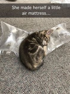 Self-Made Air Mattress - World's largest collection of cat memes and other animals Cute Funny Animals, Funny Animal Pictures, Best Funny Pictures, Cute Cats, Funny Cats, I Love Cats, Crazy Cats, Kittens Cutest, Cats And Kittens
