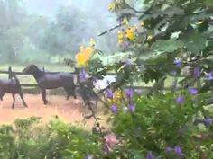 Establo San Rafael, Horseback riding, Costa Rica