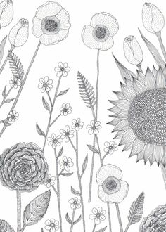 Petal to Petal: The Wonderful work of Holly Maguire