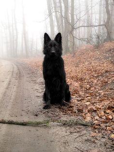 Beautiful Black dog. ...a reincarnated raven?