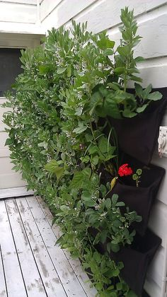 Need more space to grown all your greens? Check out this organic vertical apartment garden Apartment Garden, Vertical Container Gardening, Apartment Vegetable Garden, Planting Flowers, Lawn And Garden, Urban Garden, Vertical Garden Plants, Outdoor Gardens, Farm Gardens