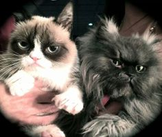 Your friends will miss you ! / Grumpy Cat with Col Meow, who passed away Jan 29, 2014 #GrumpyCat #ColonelMeow