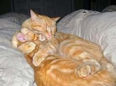 10 Photos of Cats Hugging - Cats hugging all day long.