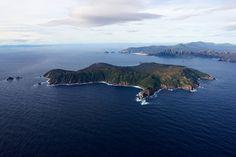 Flightless Parrot, Kakapo Parrot, Meet, Bird, Outdoor, Nature, Outdoors, Birds, Outdoor Games