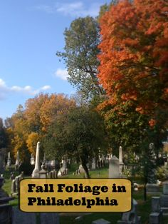 Leaf Peeping: Fall Foliage in Philadelphia – Mostly for Free - Traveling Mom