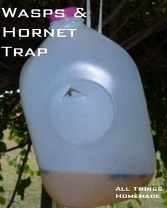 Take a gallon milk jug and cut an upside down V shape in the side way up on the jug. Press the tab in. Pour fruit juice 1 inch deep into the jug. Put the cap back on the jug and hang. Insects enter through the hole and can't get out. Wasp Trap Diy, Wasp Traps, Bee Traps, Hornet Trap, Wasp Repellent, Fly Bait, Milk Jug Crafts, Diy Pest Control, My Pool
