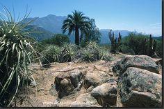Photo: La Campana National Park in Chile