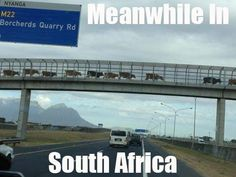 Only in South Africa.Enjoy the Shit South Africans Say! African Jokes, Farm Humor, South Afrika, Kwazulu Natal, Meanwhile In, Out Of Africa, Morning Pictures, Lol, Cape Town