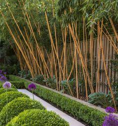 Comment planter des bambous dans son jardin | Bamboo garden, Gardens ...