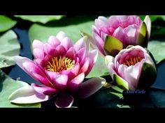 Música Relax- PIANO- Imágenes de Flores - YouTube