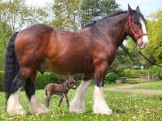 This Giant Horse And His Tiny Donkey Friend Makes The Most ADORABLE Animal Pair