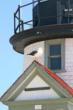 Seagull on Brant Point Light, Nantucket Lighthouse Keeper, Point Light, Nantucket Island, Beacon Of Light, Sea Captain, Sea Birds, Beach Themes, Coastal Living, Deco