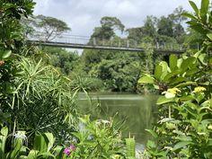 Stephen Caffyn Landscape Design Architecture Awards, Landscape Architecture, Landscape Design, Garden Design, Days In September, Singapore Botanic Gardens, Visit Singapore, 3d Visualization, Entrance Gates