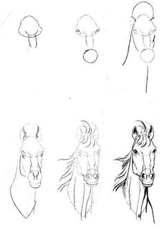 Exciting Learn To Draw Animals Ideas. Exquisite Learn To Draw Animals Ideas. Horse Drawings, Art Drawings Sketches, Animal Drawings, Pencil Drawings, Drawing Animals, Horse Head Drawing, Drawing Techniques, Drawing Tips, Painting & Drawing