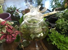 Terrariums, Sister Bloom Themed Terrariums, a division of Made-that designs