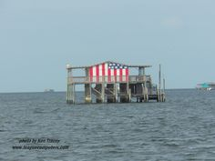 """A stilt fishing shack on the Pithlachascotee River (which means """"river of canoes"""" in Timucuan), Pasco County, FL Tarpon Springs Florida, Pasco County, Fishing Shack, New Port Richey, Tropical Beaches, State Of Florida, Sunshine State, Spring Break, Summer"""
