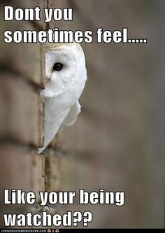 Funny Animal Captions - Animal Capshunz: Sometimes Paranoia is Justified