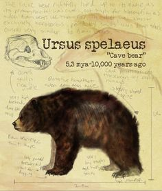 An awesome series showing some prehistoric bears and the changes that occurred in them by Shockshockshad on deviant art.  She promises more to come, very excited to see the rest of them.