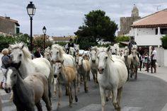 Sainte Marie de la mer - France - Fête du cheval.