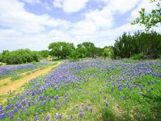 """Via CultureMap Austin! An article on Texas Land Conservancy's Pike Davis Ranch project, """"Protecting Texas for generations: The Texas Land Conservancy and centennial ranches"""""""