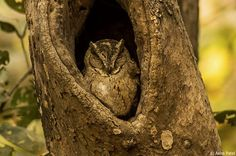 Too clever to see: 25 incredible camouflaged animals who are masters of disguise!