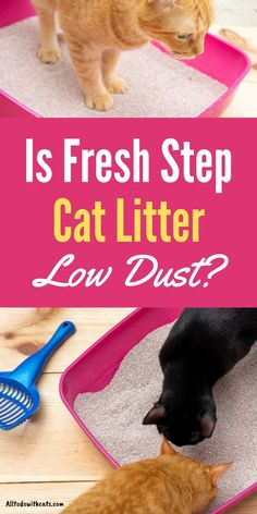 Is Fresh Step cat litter really low dust, and does it work? Find out al about Fresh Step cat litter and if it's right for you and your cat. #catlitterideas #freshstepcatlitter #lowdustcatlitter #bestcatlitter Automatic Litter Box, Best Cat Litter, Cat Reading, Lots Of Cats, Cat Life, Animal Shelter, Cool Cats, Kittens