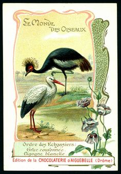 French Tradecard - Crowned Crane & White Stork by cigcardpix, via Flickr