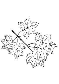 Cinq feuilles inséparables, à colorer joliment