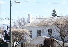 Bradford Pear Blossoms on Xenia Avenue